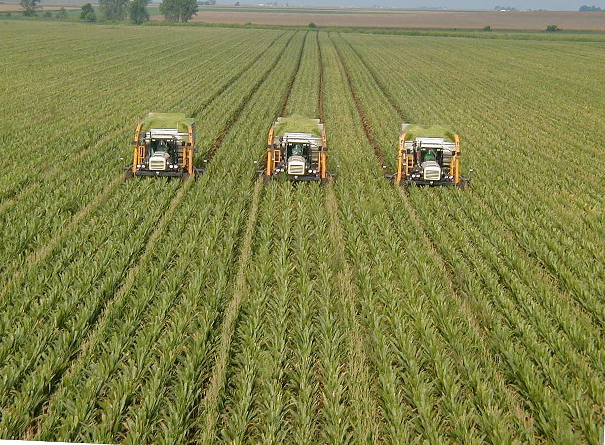 http://1.bp.blogspot.com/_BiXoeIpaRwc/TTOQvV_lO8I/AAAAAAAAABM/MxqXBnpmq-s/s1600/sustainable-agriculture.jpg