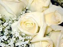 - i love white roses -