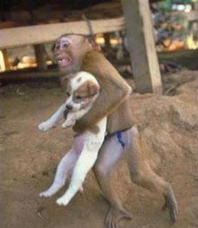 funny-monkey-dog