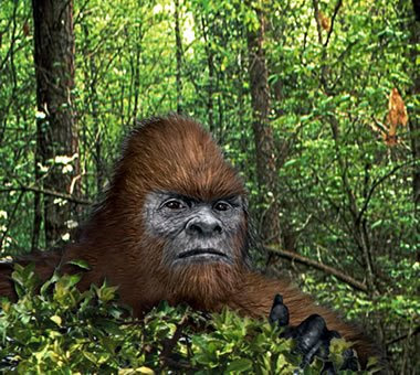 Hey, Y'All! We've Got Ourselves A Bigfoot!