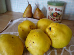 Making quince jam