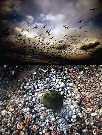 Fractales en la Natura