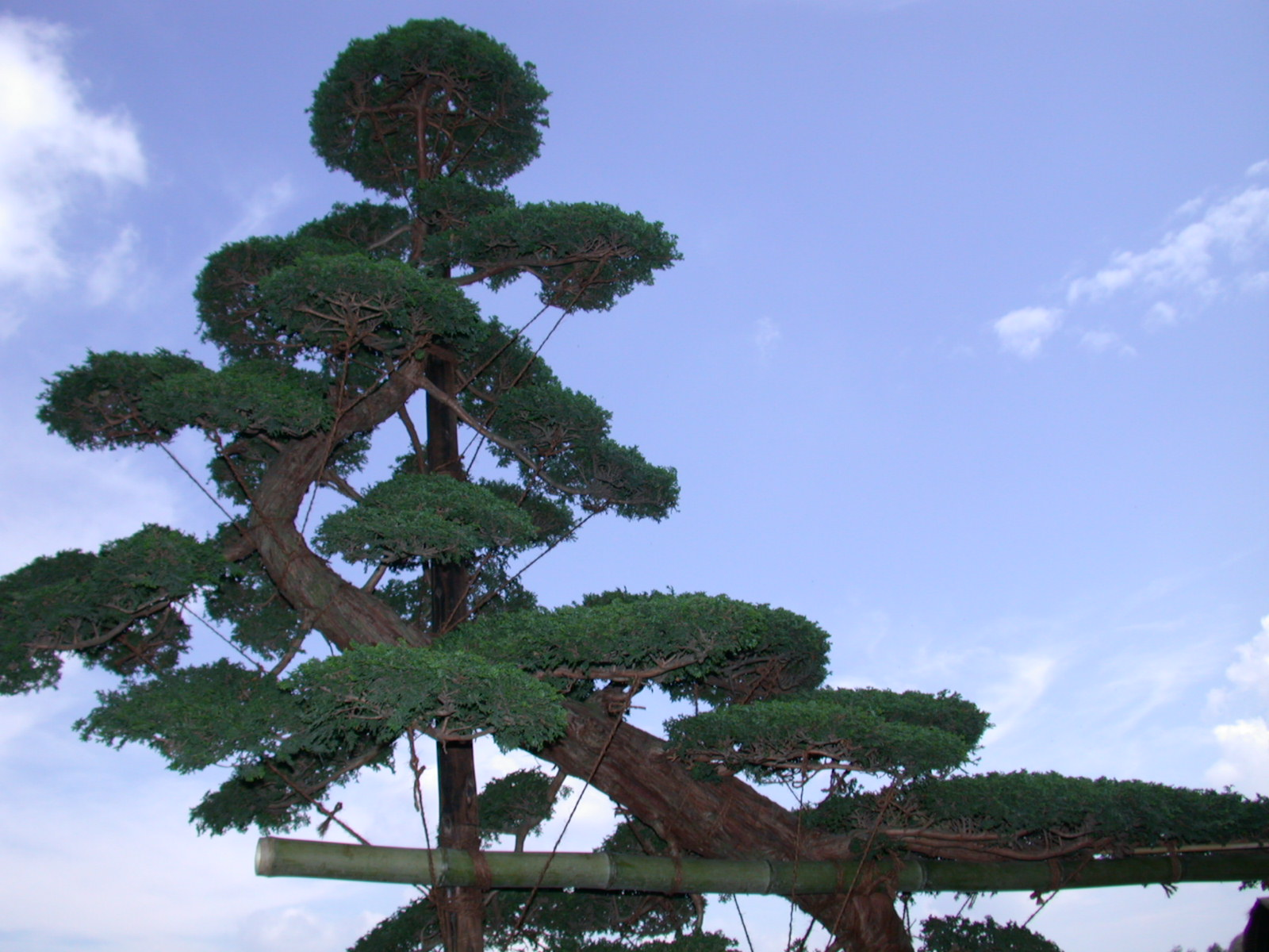 Unique creations beautiful creation nature conservation for Unusual bonsai creations