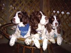 Sierra, Lacey, Ollie. Ward 4.