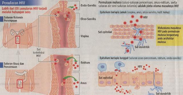 [Kesimpulan+Laporan+Penelitian+Terapi+Obat+Antiretroviral+ARV+Perpanjang+Harapan+Hidup+Penderita+HIVAIDS.jpg]