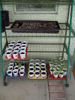 extending a short growing season - slowly harden off seedlings before transfering to the garden