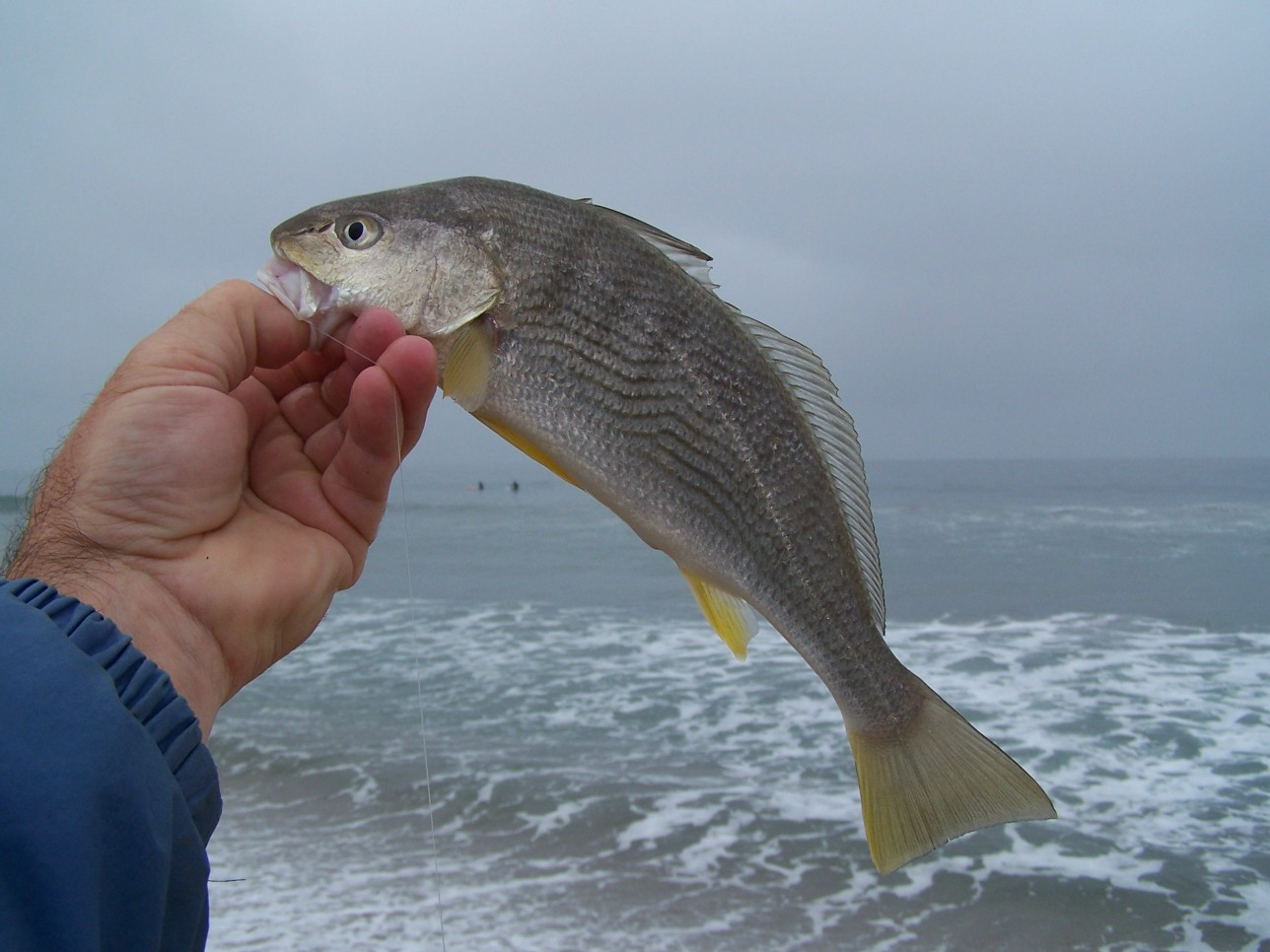 Surf fishing report october 2010 for What is a croaker fish