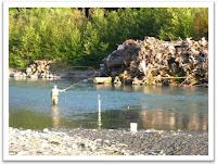 Fisherman fishing along an engineered logjam in the Hoh River