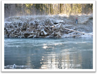 Engineered logjam on the Hoh River during the winter (2010)