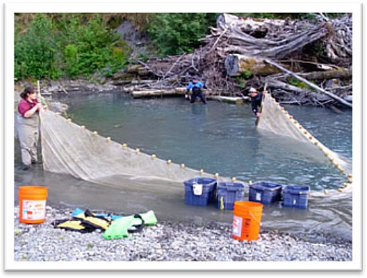 The fish files hoh river project for Hoh river fishing