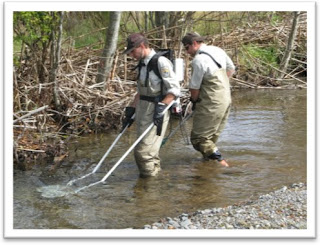 Biologists looking for lamprey in the Big Quilcene River