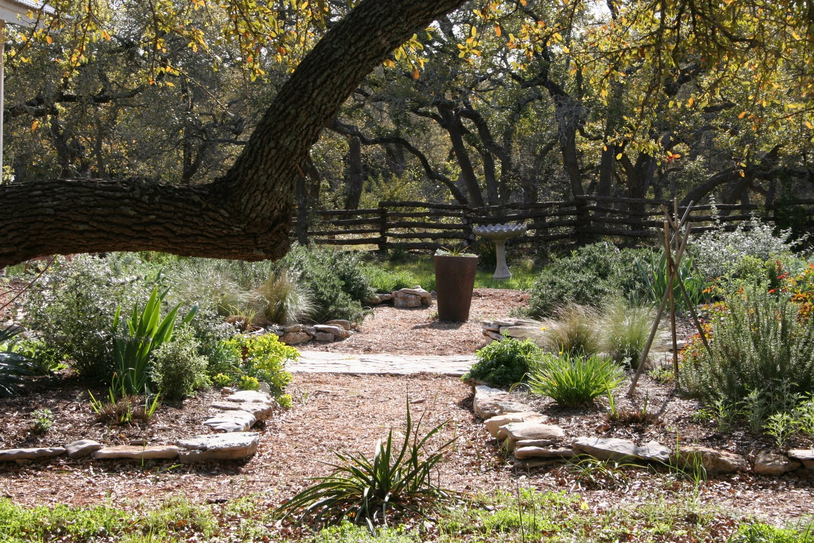 a texas hill country garden late march photographs of the. Black Bedroom Furniture Sets. Home Design Ideas