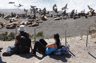 Tourists enjoy the coexistence of the sea lions