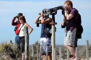 Tourists looking for orcas in Punta Norte