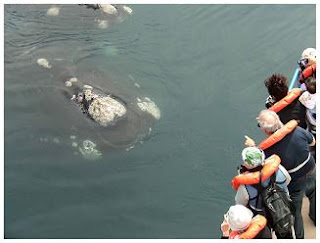 Whale watching in Peninsula Valdes Patagonia Argentina