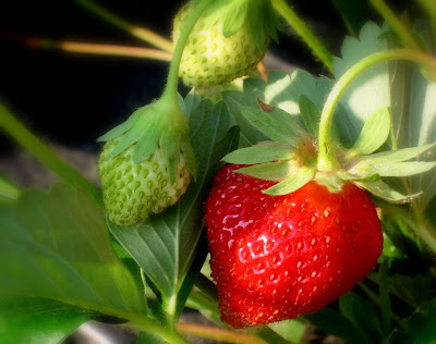 Kawasaki Disease Strawberry Tongue. Strawberry Tongue - Articles