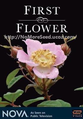 ΤΟ ΠΡΩΤΟ ΛΟΥΛΟΥΔΙ  - FIRST FLOWER (2007)