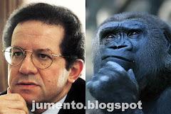 Ó Constancio tu és macaco!!!