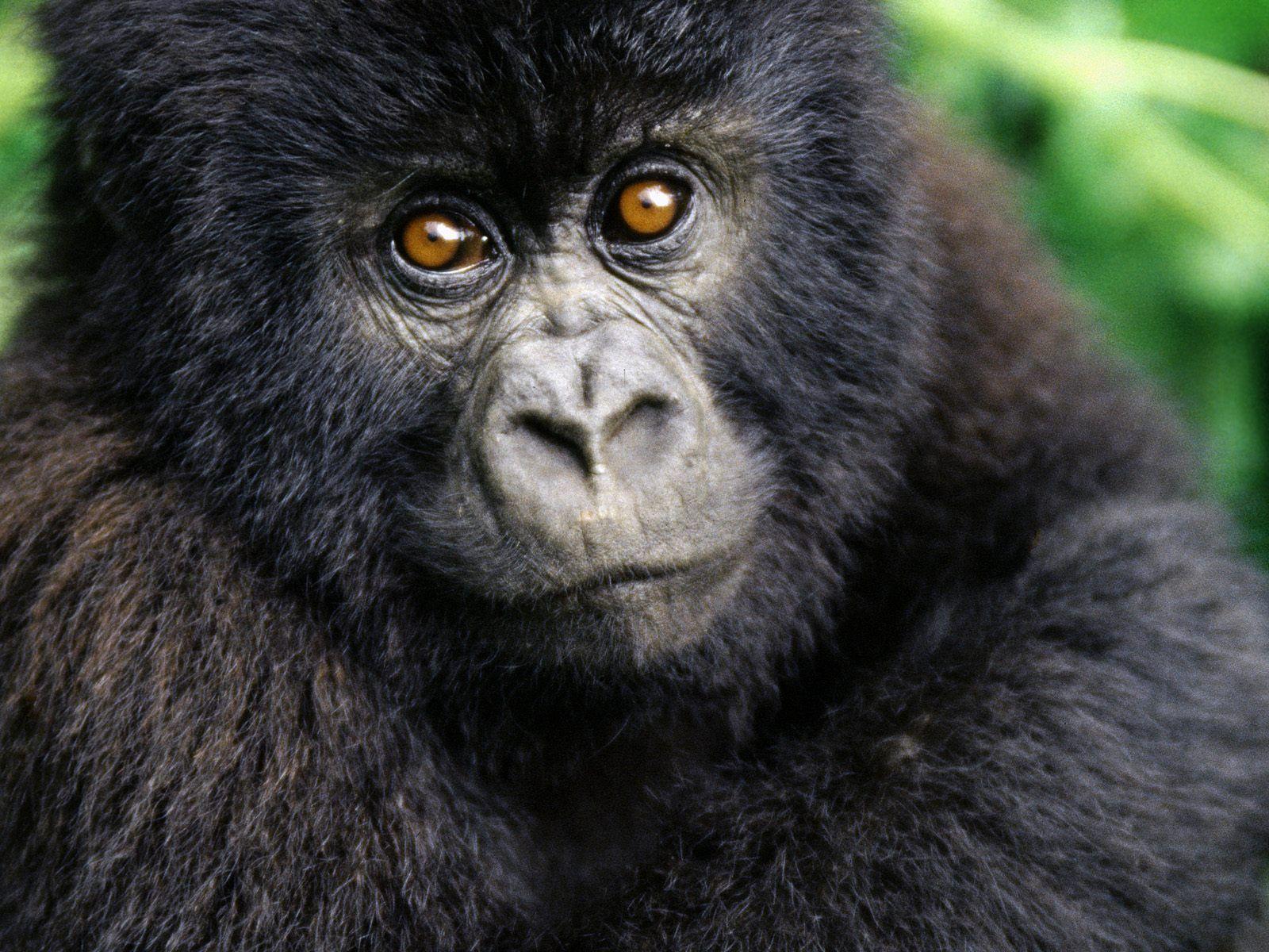 http://1.bp.blogspot.com/_BvTQDfwLKYY/TF6AMzlBJcI/AAAAAAAABFg/mVi3_mcB5Lo/s1600/Monkey+(3).jpg