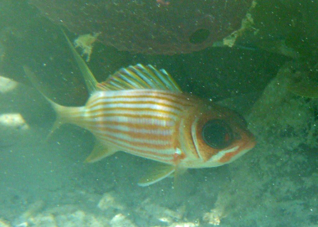 beautiful fishes in sea. eautiful fish, a Sea