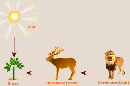 rainforest food chain diagram. But it is a little more