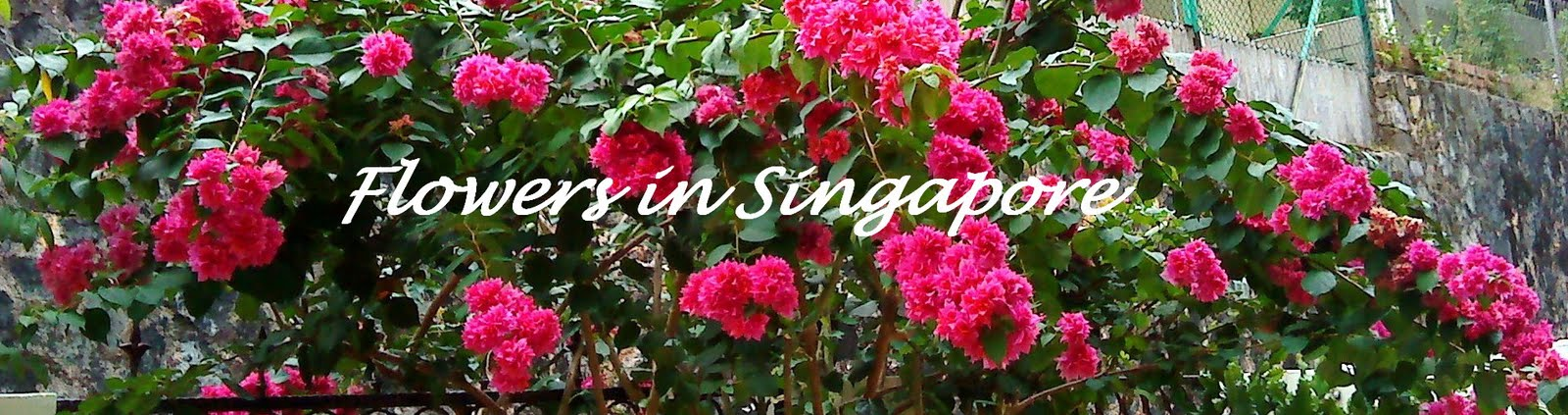 Flowers in Singapore