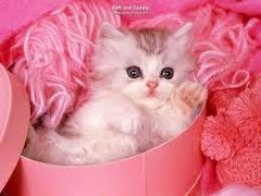 Kucing KesayanganKu