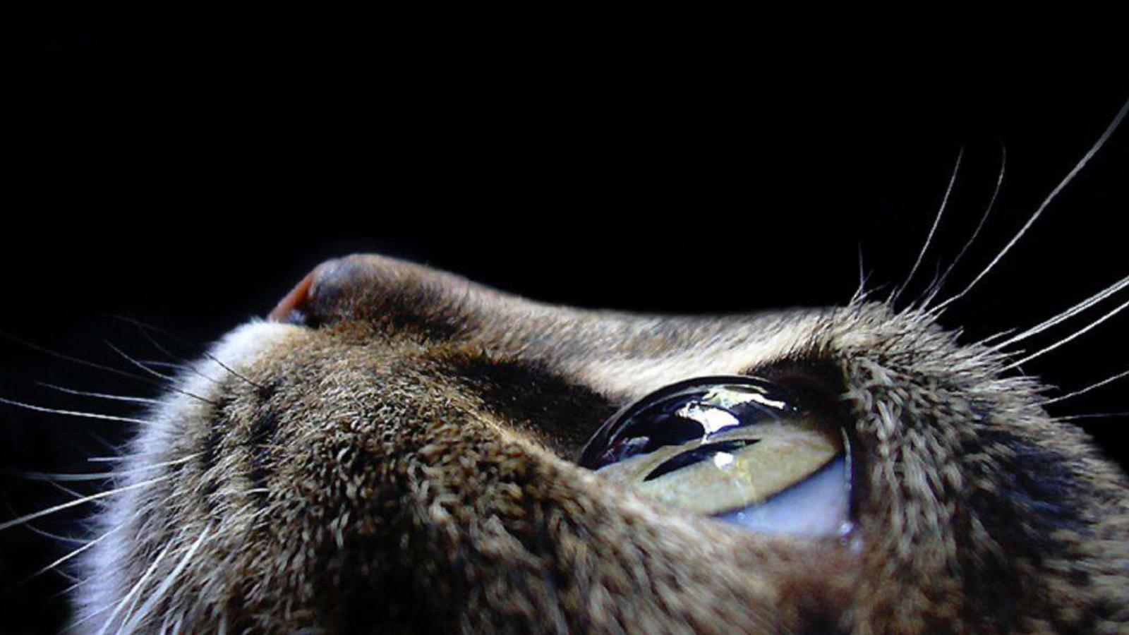 animals-pictures-cat-eyes-macro-photography.jpg