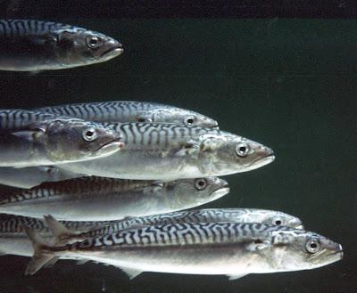 ikan unik