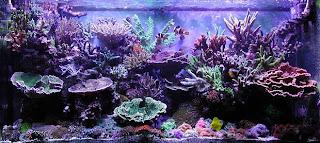 dunia perairan: design aquascape