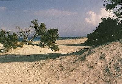 Η νήσος Χρυσή με τους κέδρους