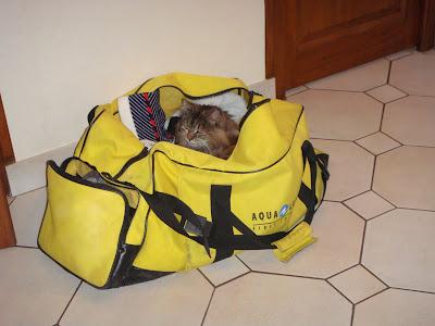 chat dans sac