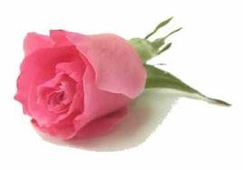 ~bunga_itu_pink~