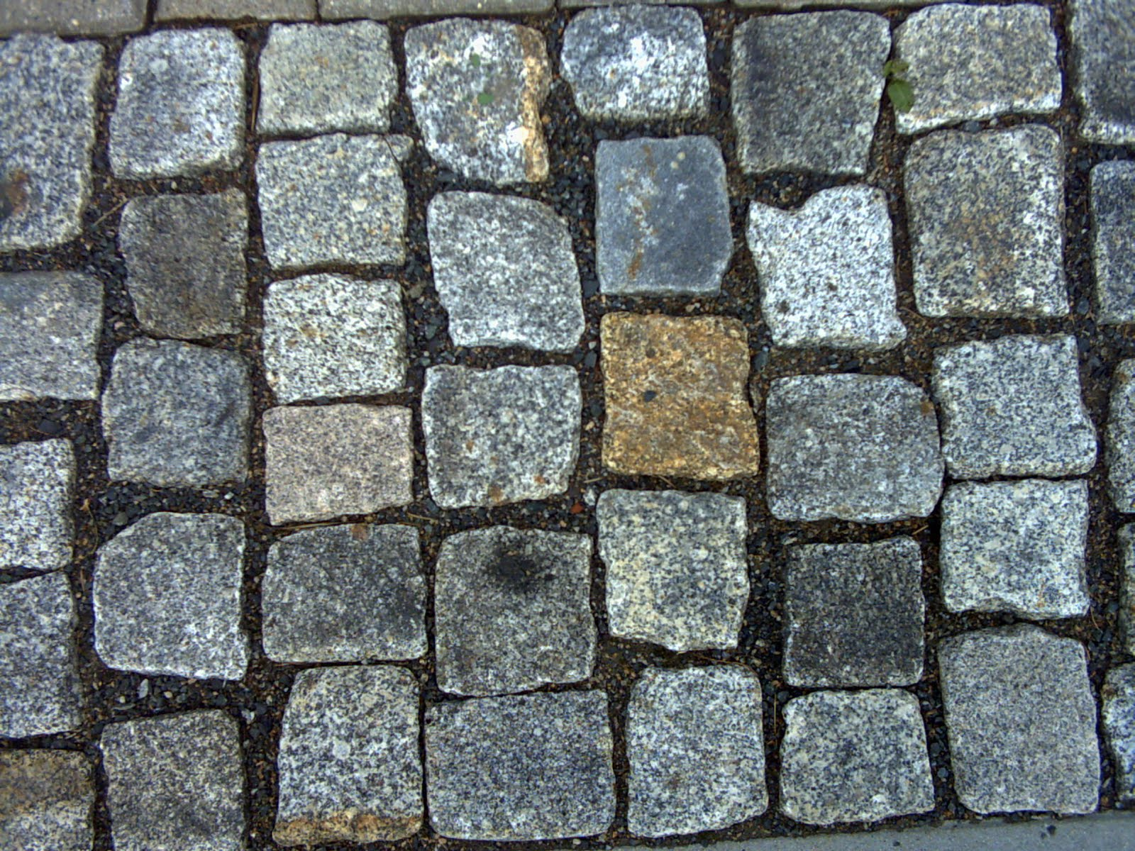 Cobblestone Stone Leave : Endurance racing cobbles