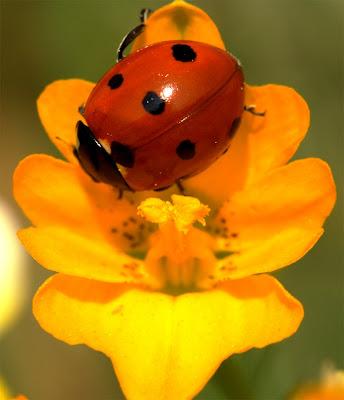 Η μύγα των λουλουδιών και οι γρήγορες