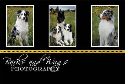 sample photography business cards. Barks amp; Wags Photography