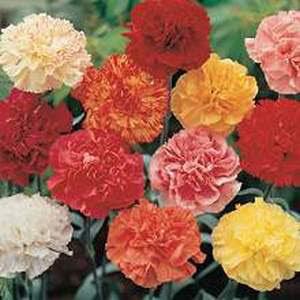 انواع النباتات والزهور وكيفية زراعتها والعناية بها Image_18803