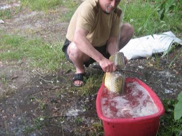 Materie prima pentru ciorba
