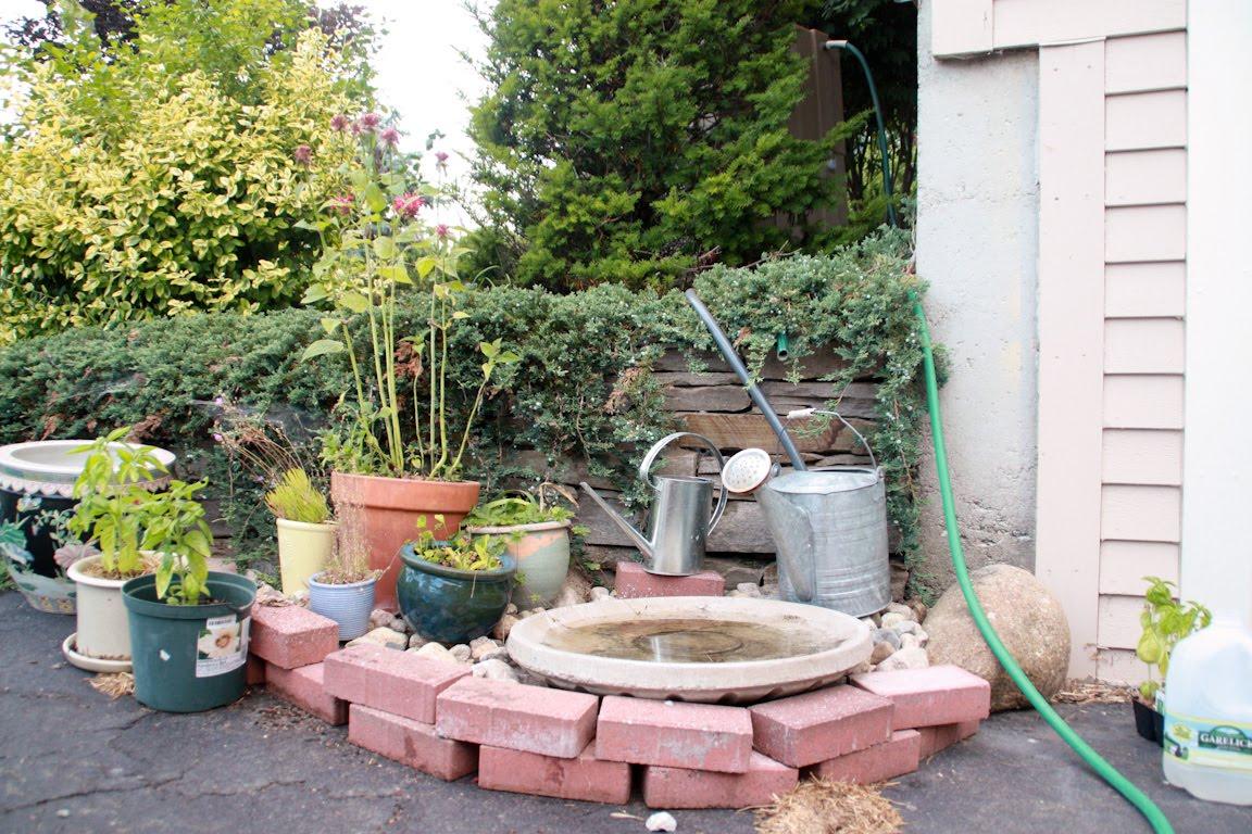 the clueless gardeners a garden blog rain barrel water conservation