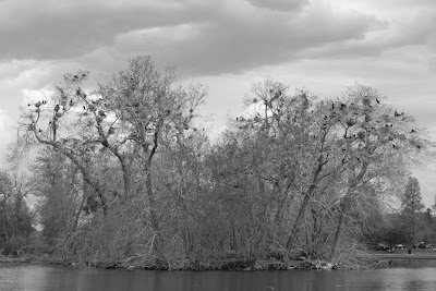photograph of Duck Lake, City Park, Denver Colorado