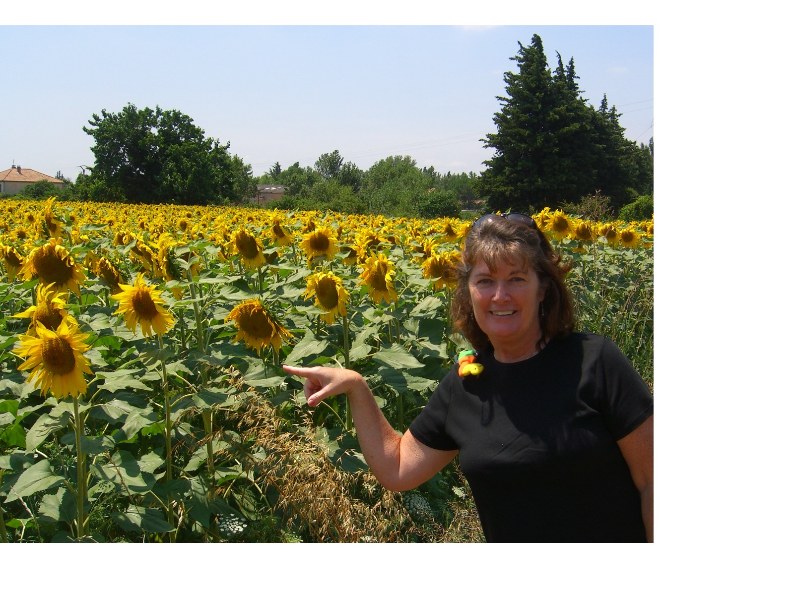 July 2- Provence and Sunflowers