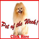 ....Pet of the Week!...