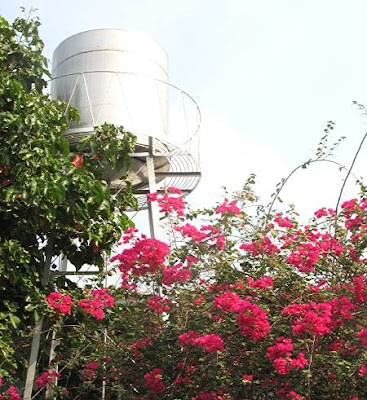 water tank and bougainvillea