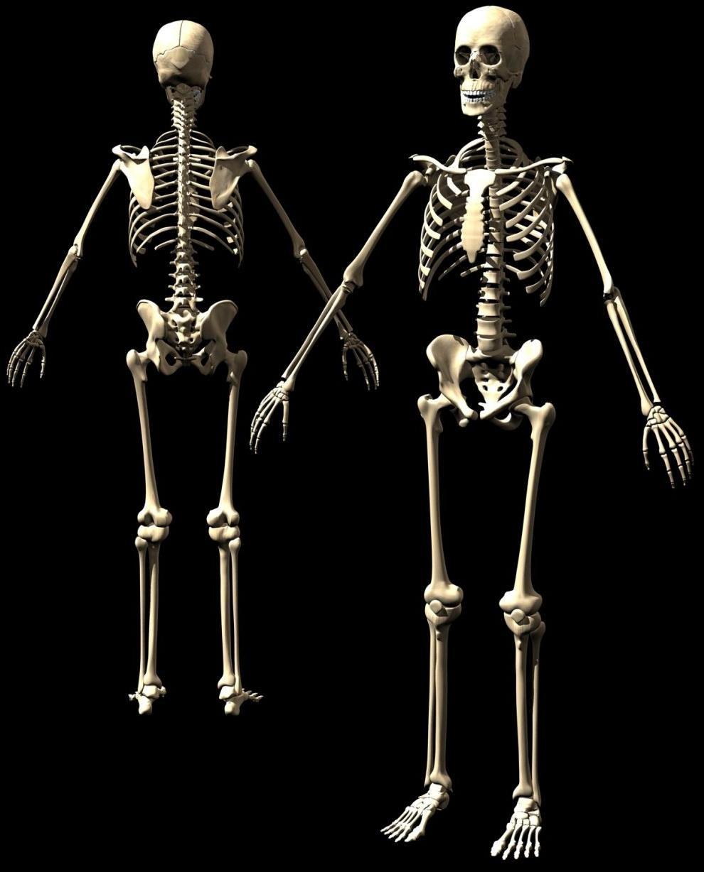 MEDICINA EN EL LENGUAJE DE LA GENTE: ANATOMIA HUMANA I: OSTEOLOGIA