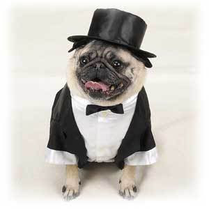 the history of dog clothes how did your dog came to wear clothes dog outfits 300x300