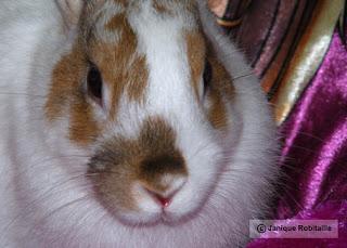 photographie animalière lapin