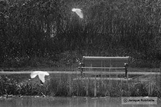 photo artistique noir et blanc banc et mouettes