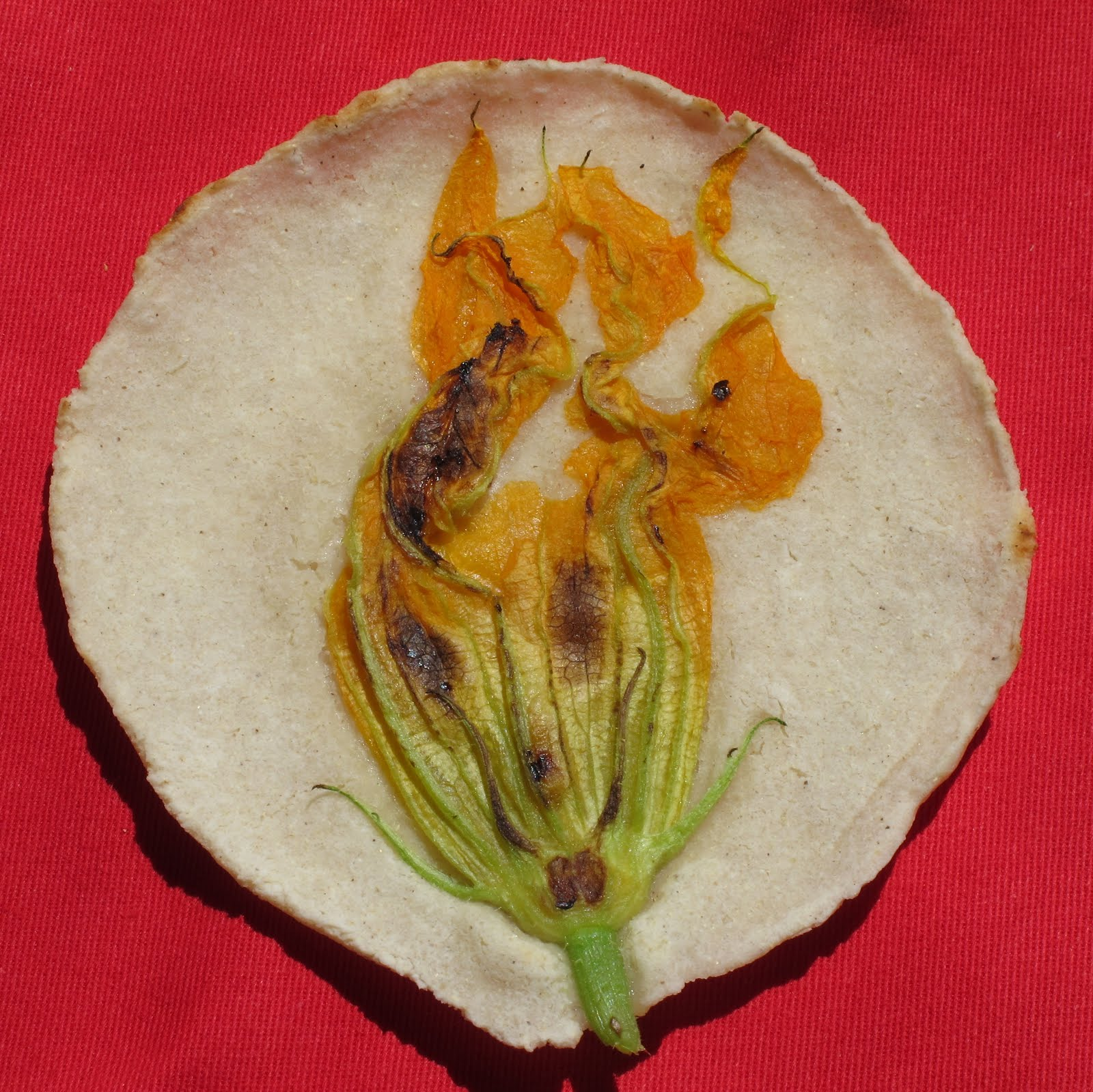 Fresh corn tortillas with zucchini flowers