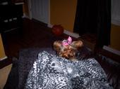 Flossie Jayne-2008