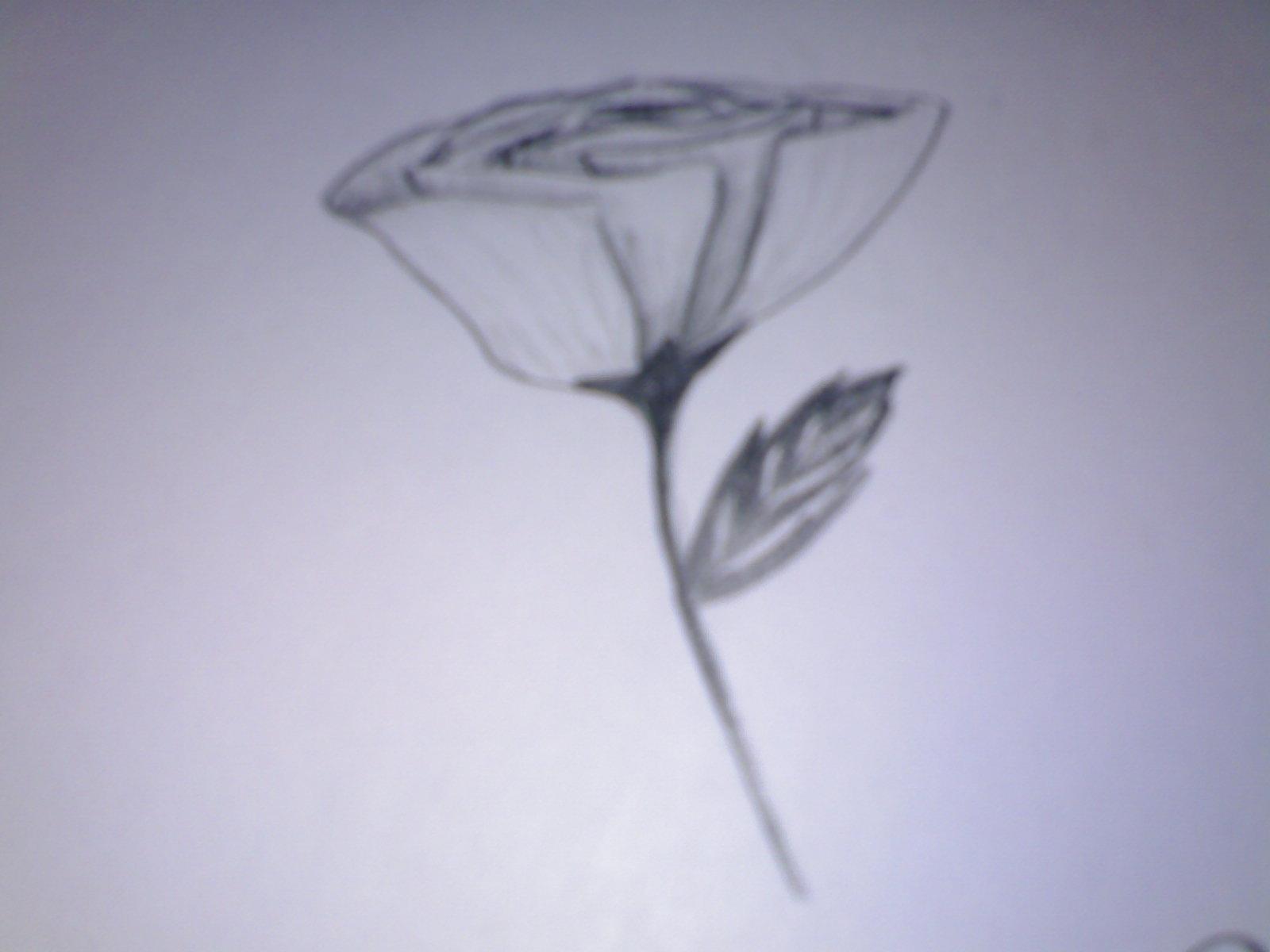 Sketsa Bunga Mawar Graffiti Picture
